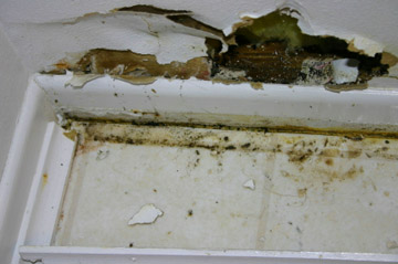 Flood Clean Up Maplewood - Flooded Basement & Mould Control Services